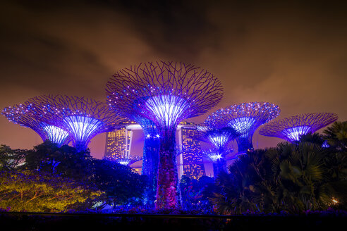 Singapore, Marina Bay, Gardens by the Bay, Super trees at night - SMAF01177