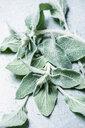 Sage leaves - CUF46995