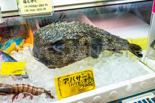 Fish at fish market in Naha, Japan - ASTF02138
