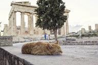 schlafende Katze vor Parthenon, Akropolis, UNESCO-Weltkulturerbe, Athen, Griechenland - MAMF00350