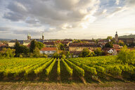 Germany, Bavaria, Bamberg, vineyard and cityscape - TAMF01134