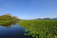 Ausflugsboot und Seerosen auf Skutarisee, Nationalpark Skadarsee, Provinz Cetinje, Montenegro - SIEF08322