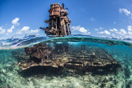 Reef life and old wrecks, Alacranes, Campeche, Mexico - CUF48041