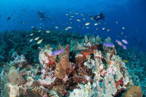 Divers exploring reef life, Alacranes, Campeche, Mexico - CUF48047