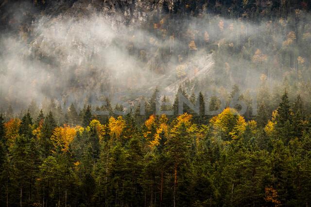 View over fir forest, Karwendel region, Hinterriss, Tirol, Austria - CUF48316