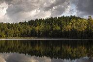 Lake reflecting a forest in Harskogen, Sweden - FOLF10267