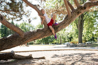 Boy clinging onto tree branch in park - ISF20259