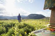Male painter walking among sunflowers sunny idyllic rural field - HEROF05538