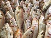 Italy, Naples, fish market - WWF04852