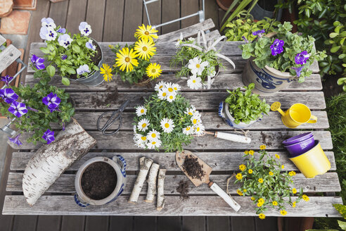 Gardening, planting of summer flowers in vintage and other decorative pots, gardening tools, secateurs and gardening tools on vintage garden table, Petunia