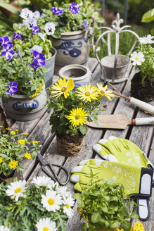 Different summer flowers and gardening tools on garden table - GWF05776