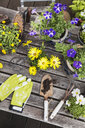 Different summer flowers and gardening tools on garden table - GWF05779