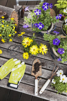 Gardening, planting of summer flowers in vintage pots and historic iron, gardening tools, secateurs and garden gloves on vintage garden table, Petunia