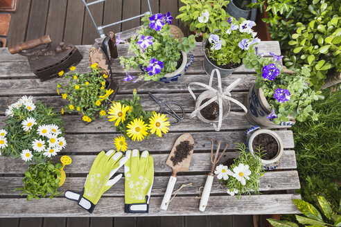 Gardening, planting of summer flowers in vintage pots and antique irons, gardening tools, secateurs and garden gloves on vintage garden table, Petunia