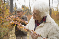 Senior woman examining autumn leaves on branch in park - HEROF06064