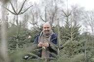 Portrait of smiling man decorating Christmas tree on a plantation - KMKF00730