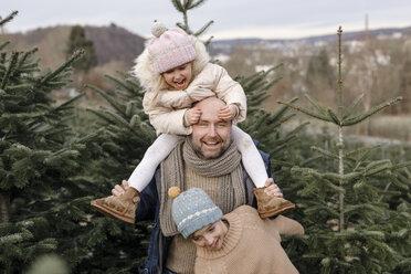 Arnsberg, NRW, Deutschland. Ein lachender Vater mit zwei Kindern auf der Weihnachtsbaum-Plantage - KMKF00745