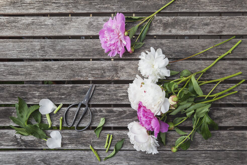 Pink and white Peonies and scissors on garden table - GWF05799