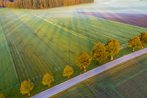 Germany, Bavaria, tree-lined country road near Dietramszell at sunrise, drone view - SIEF08346