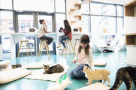 Girl playing with cats in cat cafe - HEROF07326