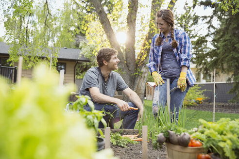 Couple harvesting vegetables in garden - HEROF08050