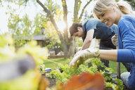 Couple tending to plants in vegetable garden - HEROF08056