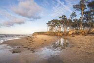 Germany, Mecklenburg-Western Pomerania, Darss, Ahrenshoop, West beach, disrooted trees - KEBF01062