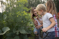Curious boy smelling fresh dill in vegetable garden - HEROF10783