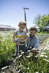 Father and son gardening, looking at daisies in sunny garden - HEROF11554