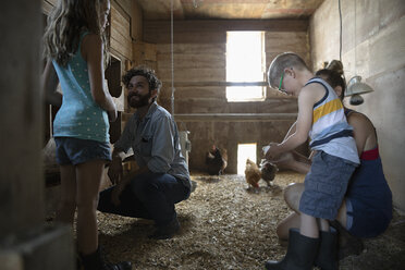 Family feeding chickens in barn - HEROF11557