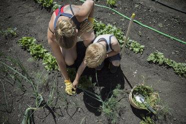 Overhead view mother and son gardening, wedding sunny garden - HEROF11896