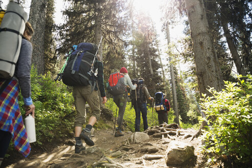 Friends hiking with backpacks and hiking poles on sunny remote trail in woods - HEROF12358