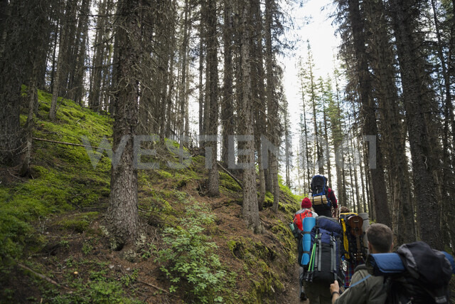 Friends hiking with backpacks in remote woods - HEROF12361