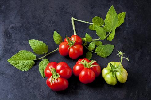 Tomaten, Sorte Reisetomaten, Tomaten (Solanum lycopersicum), Cherry-Tomaten, rot, grün,  Blätter,  kurios, ausgefallene Form, mehrteilig, Tomate für Unterwegs, teilbar, dunkler Untergrund - CSF29218