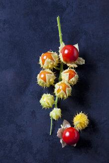 Sticky nightshade tomatoes on dark ground - CSF29248