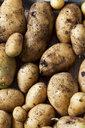 Drilling potatoes - CSF29272