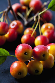 Red crab apples, close-up - CSF29293