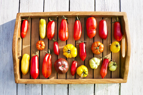 Tray with various tomatoes, stage of ripeness, ripe - CSF29311