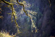 Spain, Gorbea Natural Park, moss grown tree - DSGF01765