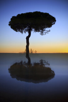 Silhouette and reflection of pine tree at sunrise - DSGF01784
