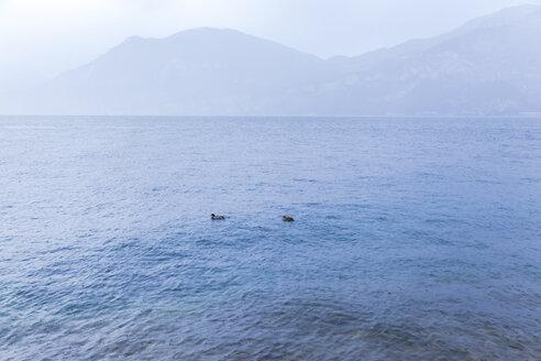 Italy, Veneto, Lake Garda near Brenzone - FLMF00118