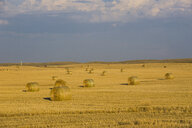 USA, Wyoming, Bales of Straw on a field - RUNF01042