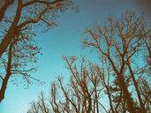 Bare plane trees in Berlin, Germany - ALEF00092