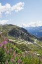 Switzerland, Ticino, Gotthard Pass, Fireweed in the foreground - GWF05848