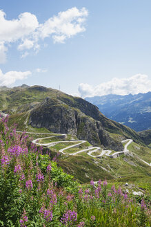 Switzerland, Ticino, Gotthard Pass, Fireweed in the foreground - GWF05848