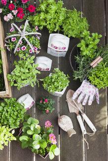 Gardening, herb garden planting with summer flowers, gardening tools and garden gloves, vintage, historic food porcelaine pots, Salvia, kleinblättriges Basilikum (Ocimum basilicum), Petunia, Wasabino (Brassica juncea), Marokkanische Minze (Nanaminze, Mentha), Zitronenmelisse (Melissa officinalis), Nelken (Dianthus), Mini-Rose (Rosa), Thyme, strawberries (Fragaria), Rosmary (Rosmarinus officinalis), Gewürztagetes (Tagetes tenuifolia), Bohnenkraut (Satureja), decorarion bird - GWF05852