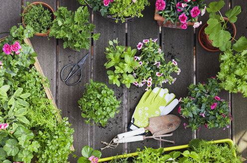 Planting herbs and flowers for indoor farming on a balcony - GWF05858