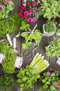 Planting herbs and flowers in to vintage storage pots for indoor farming - GWF05861