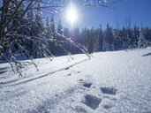 Germany, Upper Bavarian Forest Nature Park, snow-covered winter landscape with scent of hare - HUSF00009
