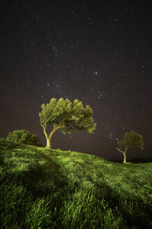 Spain, Cadaques, olive trees under starry sky - DSGF01816